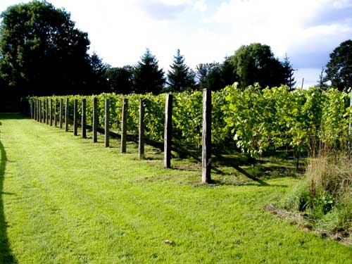 renishaw hall | english wine | lightfoot wines