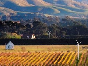 new zealand wine | wine from new zealand | martinborough wine | lightfoot wines
