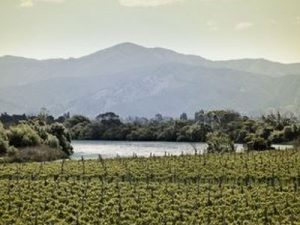 new zealand wine | marlborough wine | lightfoot wines | te pa winery